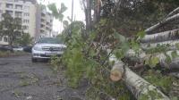 Буря в Бургас: 15-метрово дърво падна върху автомобил