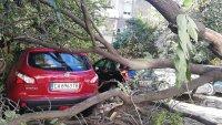 снимка 1 Дърво падна зад жилищен блок в Пловдив, нанесени са щети по автомобили