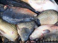 Инспектори заловиха около 250 кг незаконно уловена риба