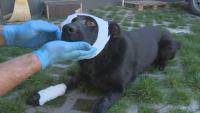 Неизвестен стреля по бездомно куче в София