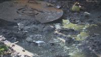 Отпадни води: Незаконен канал се излива в двор на къща в София