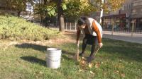 Възрастна жена всеки ден почиства градинката на герба на Търговище