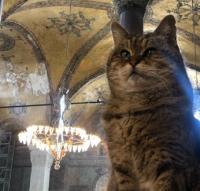 """Почина котето Гли, един от символите на """"Света София"""" в Истанбул"""