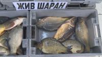 Преди Никулден: БАБХ проверява рибните пазари и борсите