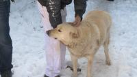 Щастлив край: Нападнотото с нож куче Белчо намери дом и грижовни стопани