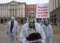 Протестиращи настояха за закриване на фермите за норки заради COVID-19
