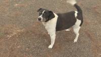 Мъж, отгледан в дом за сираци, основава център за бездомни кучета