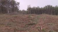 Изсича се борова гора край Варна