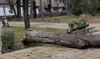 Голямо дърво падна върху пейка в пловдивски парк