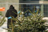 По-малко коледни дръвчета се купуват във Варна тази година
