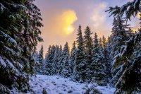 снимка 3 Витоша - любимо място за разходка и през зимата