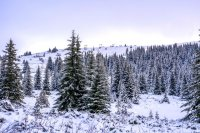 снимка 8 Витоша - любимо място за разходка и през зимата