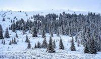 снимка 10 Витоша - любимо място за разходка и през зимата