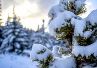 снимка 14 Витоша - любимо място за разходка и през зимата