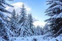 снимка 15 Витоша - любимо място за разходка и през зимата