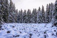 снимка 18 Витоша - любимо място за разходка и през зимата