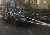 Паднали клони и материални щети след силния вятър в София