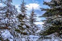 снимка 16 Витоша - любимо място за разходка и през зимата