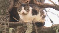 Полска котка живее повече от 9 години на дърво