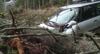 Паднали дървета затиснаха 5 коли в Пампорово