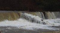 Опасното време доведе до наводнения, паднали дървета и населени места без ток (Обзор)