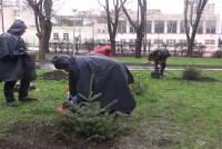 Нов живот за коледните дръвчета в Бургас