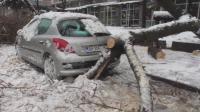 Множество счупени дървета и клони във Видин