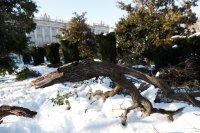 Бурята Филомена блокира Мадрид