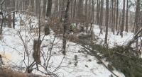 Законно ли се сече гората край Владая?