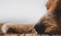 Домашно куче нахапа 10-годишно дете във Видинско