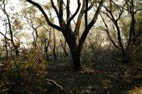снимка 5 Опасност от пожари заради горещините в Австралия