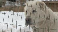 Мъж и жена отглеждат 200 кучета и 90 котки в незаконен приют край Елин Пелин