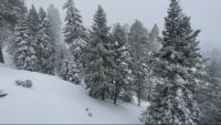 Сняг затрупа Калифорния