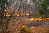 снимка 1 Силен вятър разгаря горския пожар в Австралия, опасността за хората остава
