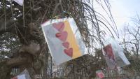 """Дърво на влюбените """"разцъфна"""" в Русе"""