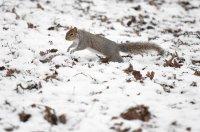 Смразяващ студ във Великобритания - измериха минус 17 градуса