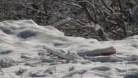 Най-студено днес беше в София и Драгоман - минус 8 градуса