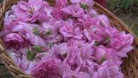 Розопроизводителите са заплашени от фалит