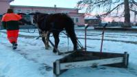 Кон замести снегорин: За час и половина Веска изчиства тротоарите в Момино село