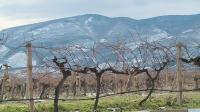 Температурните аномалии тази година застрашават лозята и овошките