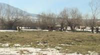Коне застрашават шофьори на пътя край Дупница