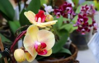 """Богатството на """"Орхидеите"""" в Ботаническата градина на БАН"""