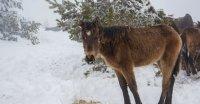 Три години по-късно: Глобиха животновъда, причинил смъртта на конете в Осоговската планина