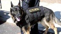 Полицейските кучета се включиха в борбата срещу COVID-19 в Латинска Америка