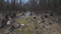 Река Какач в Северния парк в София се е превърнала в сметище