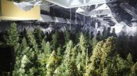 Разбиха модерна наркооранжерия в къща в град Шипка