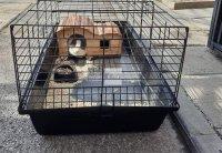 Пореден случай: Две зайчета бяха изхвърлени до контейнер в София