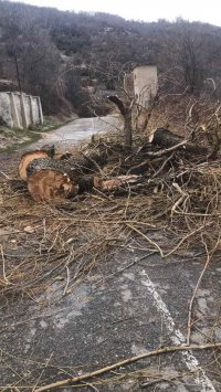 Бурният вятър събори дървета и блокира движението към асеновградското село Орешец