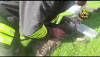 Пожарникари спасиха котка в горящ гараж