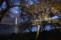 снимка 10 Японските вишни във Вашингтон цъфнаха (Снимки)
